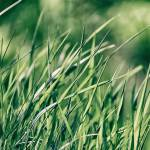 Grass Aquarium Backgrounds