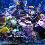 Reef Aquarium Backgrounds