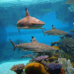 Shark Aquarium Backgrounds
