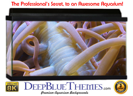 Buy Aquarium Background Awesome Anemone Aquarium Background