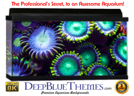 Buy Aquarium Background Awesome Animal Aquarium Background