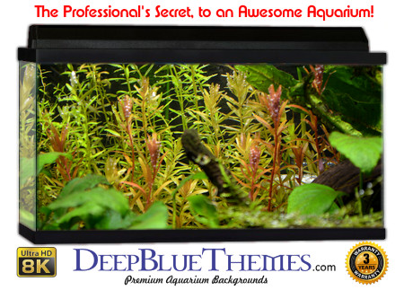 Buy Aquarium Background Awesome Background Aquarium Background
