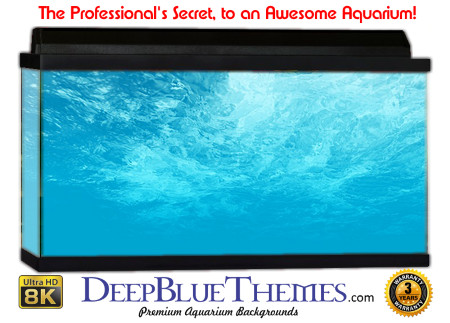 Buy Aquarium Background Awesome Blue Aquarium Background