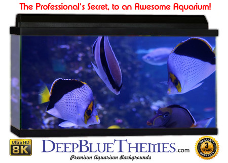 Buy Aquarium Background Awesome Bluish Aquarium Background