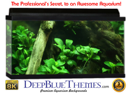 Buy Aquarium Background Awesome Branch Aquarium Background