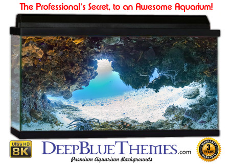 Buy Aquarium Background Awesome Cave Aquarium Background