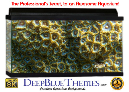 Buy Aquarium Background Awesome Closecoral Aquarium Background