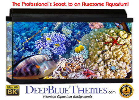 Buy Aquarium Background Awesome Colors Aquarium Background
