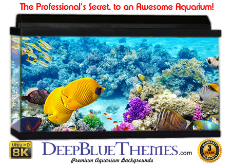 Buy Aquarium Background Awesome Coral Aquarium Background