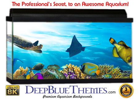 Buy Aquarium Background Awesome Creatures Aquarium Background