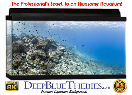 Buy Aquarium Background Awesome Formation Aquarium Background
