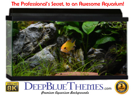 Buy Aquarium Background Awesome Goldfish Aquarium Background