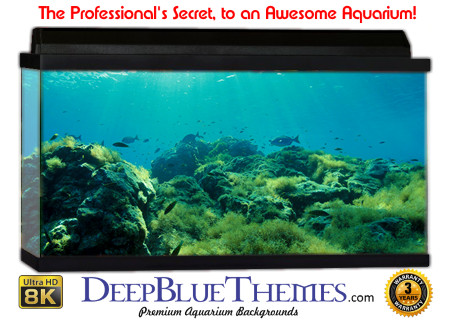 Buy Aquarium Background Awesome Green Aquarium Background