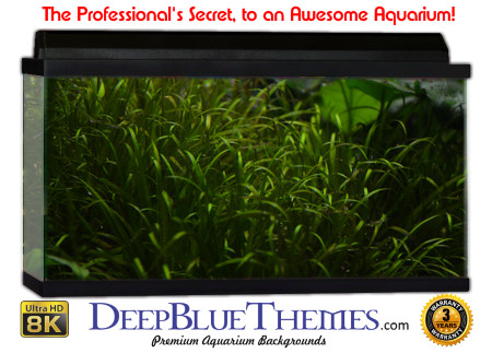 Buy Aquarium Background Awesome Greengrass Aquarium Background