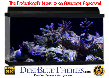 Buy Aquarium Background Awesome Growth Aquarium Background