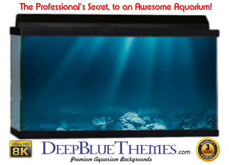 Buy Aquarium Background Awesome Light Aquarium Background