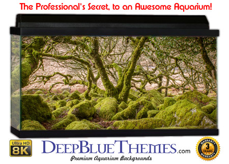 Buy Aquarium Background Awesome Mossy Aquarium Background