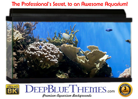 Buy Aquarium Background Awesome Natural Aquarium Background