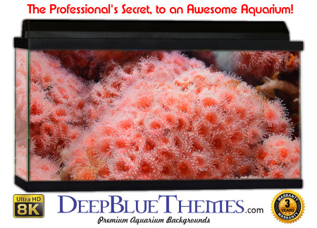 Buy Aquarium Background Awesome Pinklife Aquarium Background