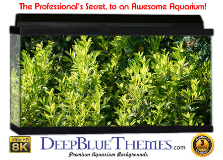 Buy Aquarium Background Awesome Plants Aquarium Background