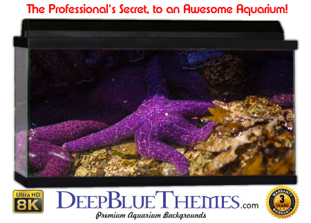 Buy Aquarium Background Awesome Purple Aquarium Background
