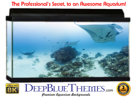 Buy Aquarium Background Awesome Ray Aquarium Background