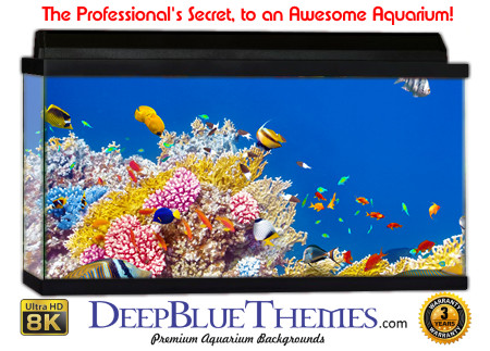 Buy Aquarium Background Awesome Reef Aquarium Background