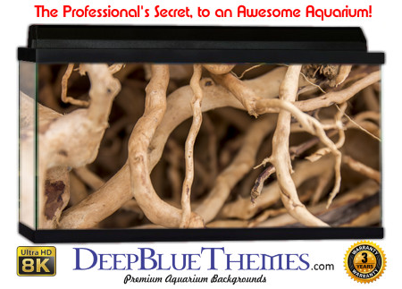 Buy Aquarium Background Awesome Roots Aquarium Background