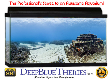 Buy Aquarium Background Awesome Ruin Aquarium Background