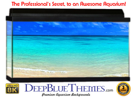 Buy Aquarium Background Beach Clear Aquarium Background