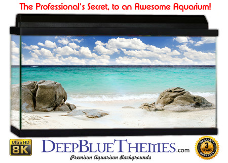 Buy Aquarium Background Beach Rock Aquarium Background