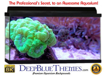 Buy Aquarium Background Classic Brain Aquarium Background