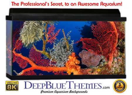 graphic relating to Aquarium Backgrounds Printable named Aquarium Backgrounds for Any Dimension Tank