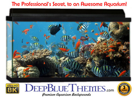 how to make background for fish tank