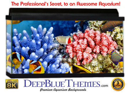 Buy Aquarium Background Classic Coral Aquarium Background