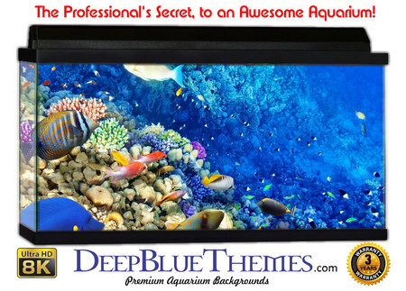 Buy Aquarium Background Classic Edge Aquarium Background