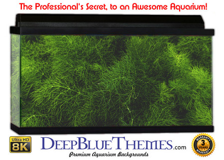 Buy Aquarium Background Classic Grass Aquarium Background