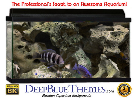 Buy Aquarium Background Classic Hard Aquarium Background