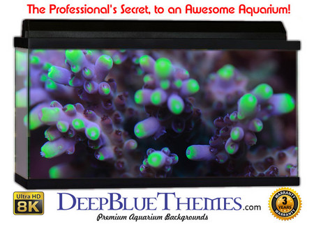 Buy Aquarium Background Classic Life Aquarium Background