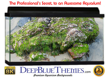 Buy Aquarium Background Classic Moss Aquarium Background