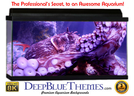 Buy Aquarium Background Classic Octopus Aquarium Background