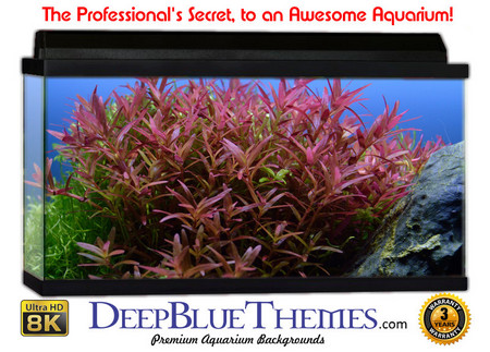 Buy Aquarium Background Classic Plant Aquarium Background