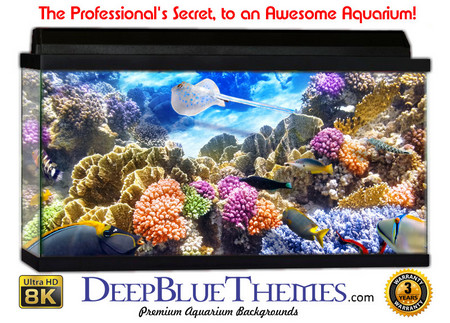 Buy Aquarium Background Classic School Aquarium Background