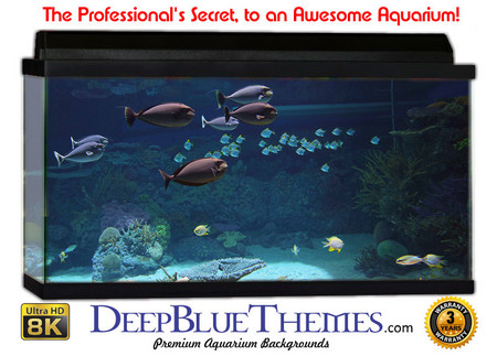 Buy Aquarium Background Classic Tank Aquarium Background