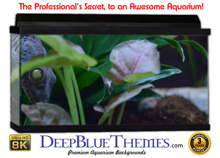 Buy Aquarium Background Classic Watching Aquarium Background