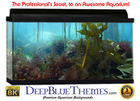 Buy Aquarium Background Classic Wild Aquarium Background