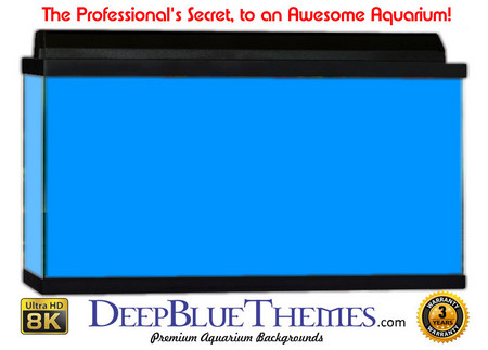Buy Aquarium Background Colors Mediumblue Aquarium Background