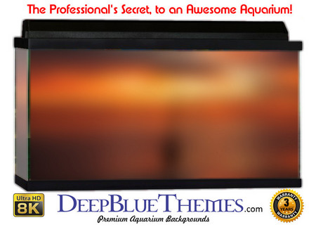 Buy Aquarium Background Colors Sunset Aquarium Background