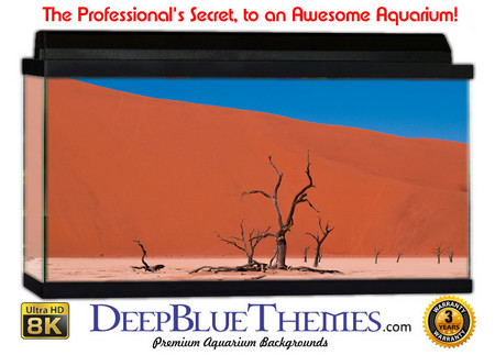Buy Aquarium Background Desert Arch Aquarium Background