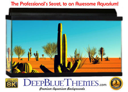 Buy Aquarium Background Desert Cactus Aquarium Background